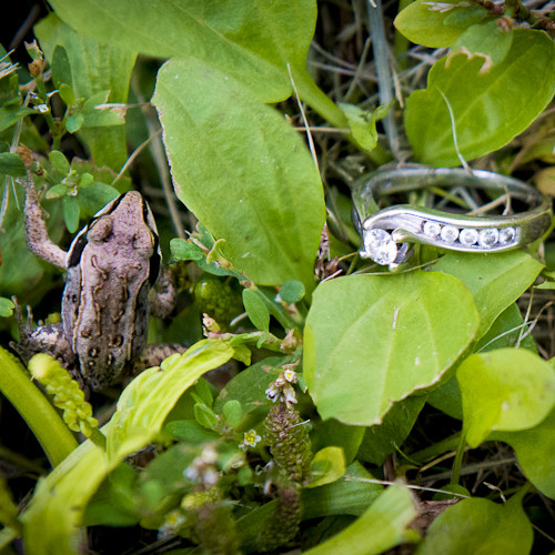 Gabriella and Bryce's Engagement Photos (featuring a frog)